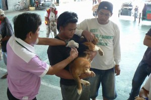 Anti Rabies Vaccination for Dogs and Cats with Municipal Agriculture and Provincial Veterinarians in Barangay Sto Thomas Subic,Mayor Jay Khonghun (3)