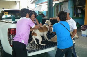 Anti Rabies Vaccination for Dogs and Cats with Municipal Agriculture and Provincial Veterinarians in Barangay Sto Thomas Subic,Mayor Jay Khonghun (7)