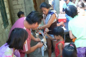 Anti Rabies Vaccination for Dogs and Cats - Subic Zambales (2)