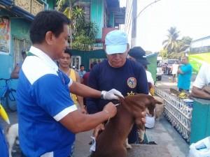 Massive Anti rabbies vacination barangay calapandayan Subic (1)