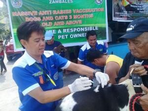 Massive Anti rabbies vacination barangay calapandayan Subic (10)