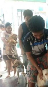 Massive Anti rabbies vacination barangay calapandayan Subic (3)