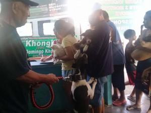 Massive Anti rabbies vacination barangay calapandayan Subic (4)