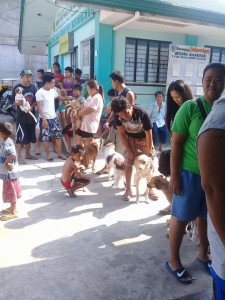 Massive Anti rabbies vacination barangay calapandayan Subic (5)