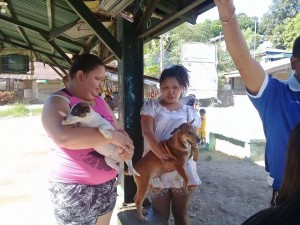 Massive anti Rabbies Vaccination for Dogs and Cats in Resettlement Brgy Manganvaca Subic (1)
