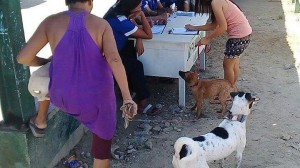 Massive anti Rabbies Vaccination for Dogs and Cats in Resettlement Brgy Manganvaca Subic (5)